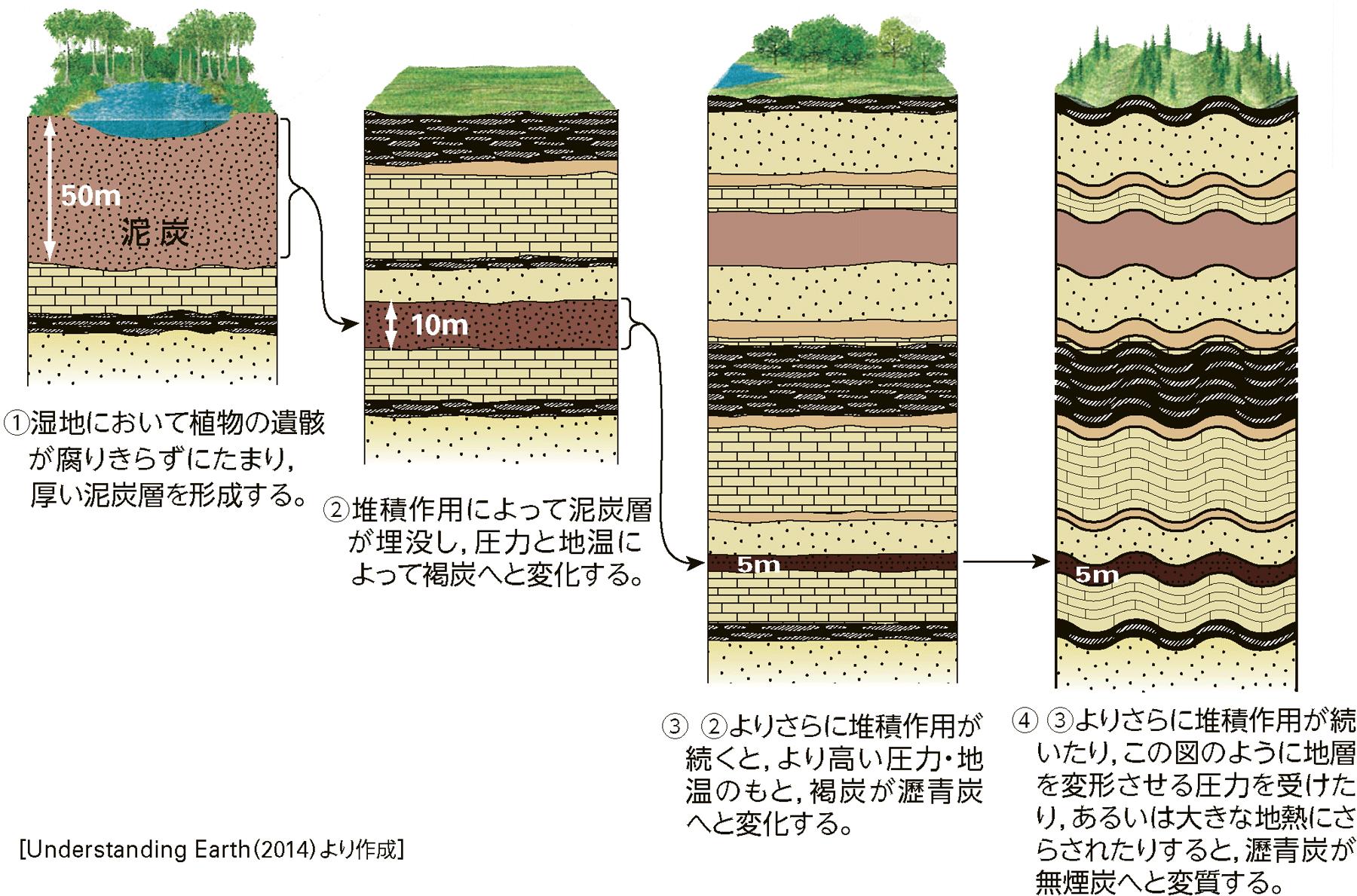 石炭層の生成過程